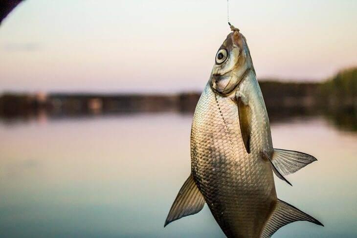 Bild von Fisch an der Angel