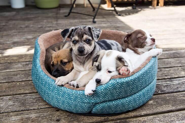 Bild mit Korb voller Hundewelpen