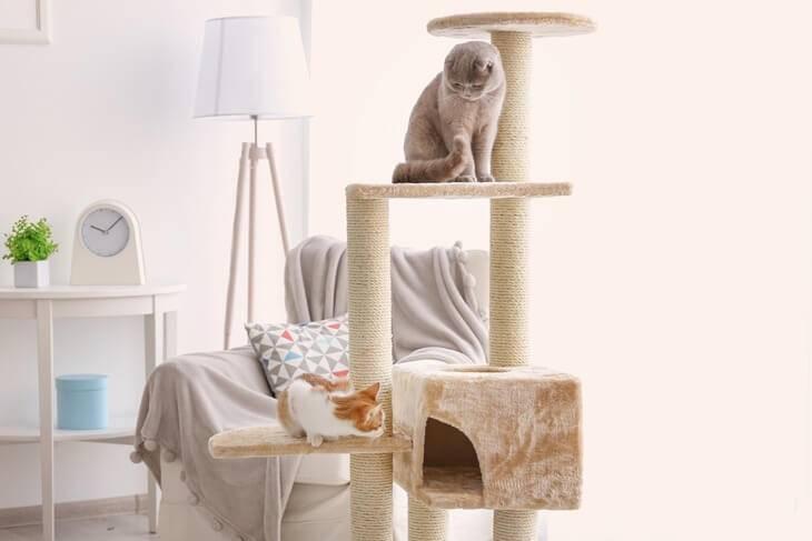 Bild von zwei Katzen auf dem Kratzbaum