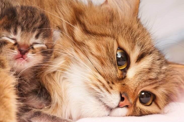 Bild von Katze mit Katzenbaby