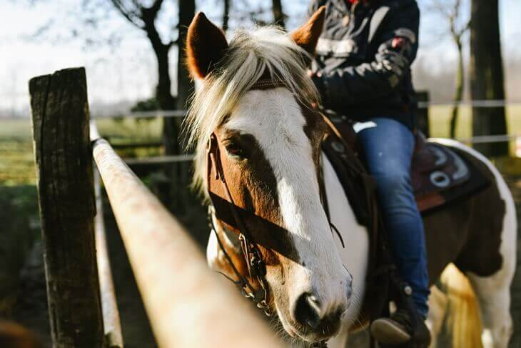 Bild von Reiter auf Pferd