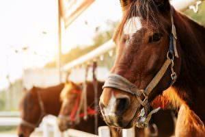 Bild von Pferd im Pferdestall