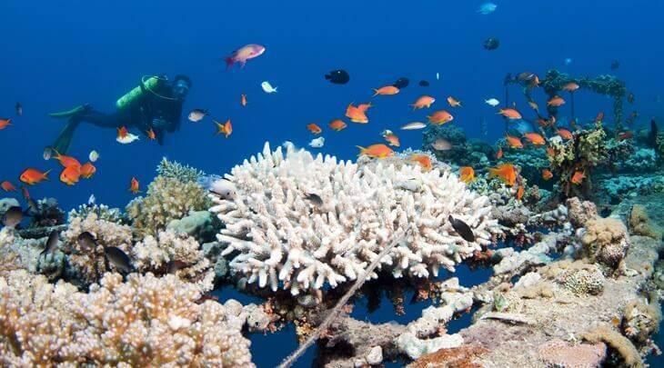 Bild von Taucher an Korallenriff