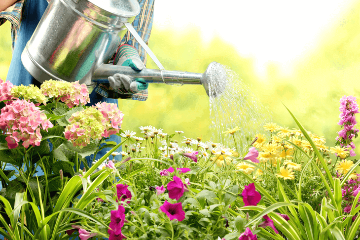 Bild von Gärtner beim Blumen gießen