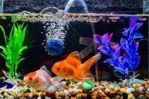 Bild von bunten Fischen im Aquarium