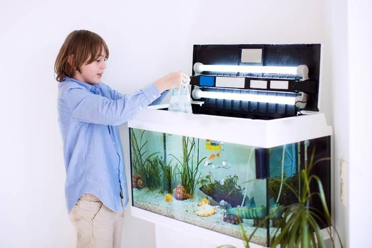Bild von Junge mit Aquarium